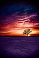Vibrant Prairie II by jay-peg