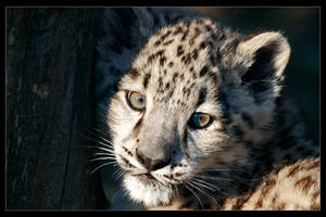 Leopard Look I by jay-peg
