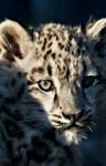 Leopard Look II