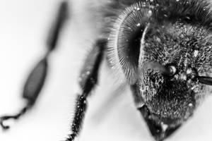 Portrait of a bee II by Moepling