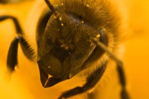 A bee by Moepling