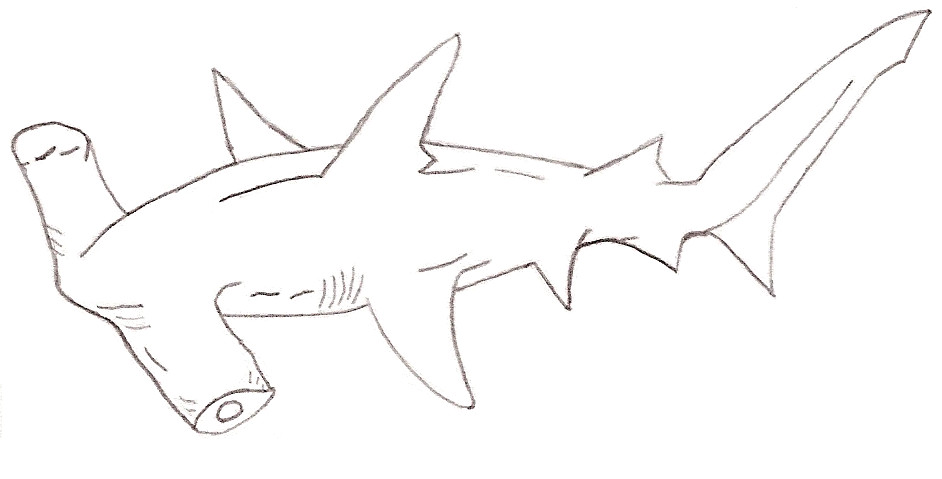 Shark Week Hammerhead by jaina-anne