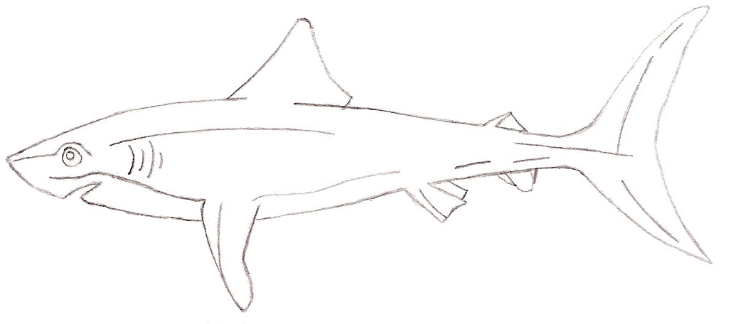 Mako Shark by j...