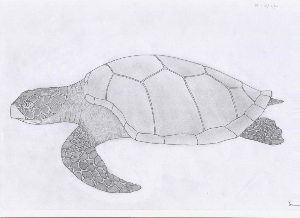 Sea Turtle by IanMelbourne93