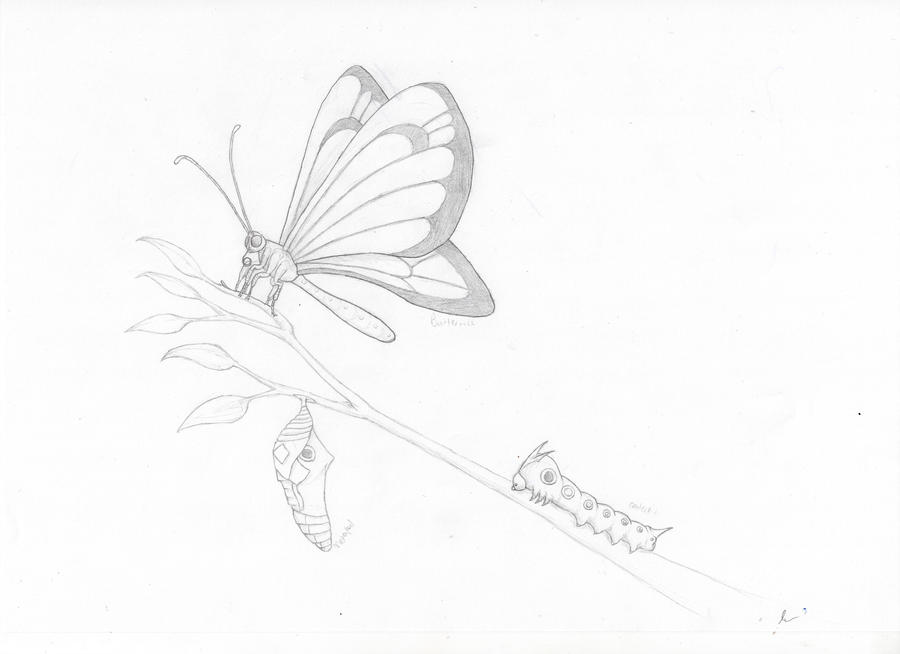 Motel room moreover Alternative energy source furthermore Alternative energy source likewise Realistic Pokemon 12 Caterpie Metapod Butterfree 332846053 moreover Save fuel. on saving energy cartoons