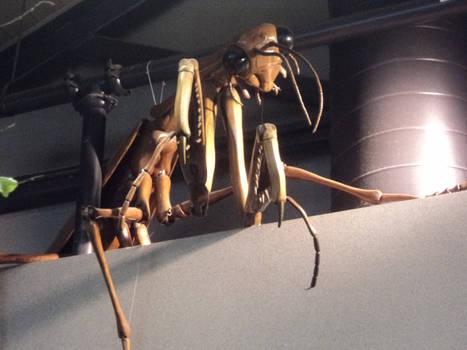 Wooden Mantis