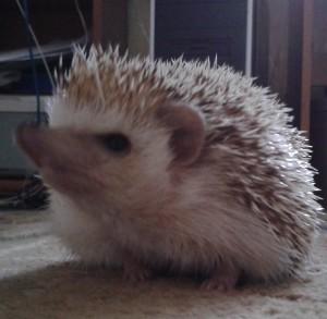 Darrthy's Profile Picture