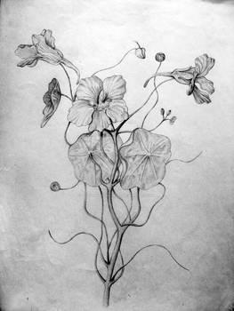 Another flower:D