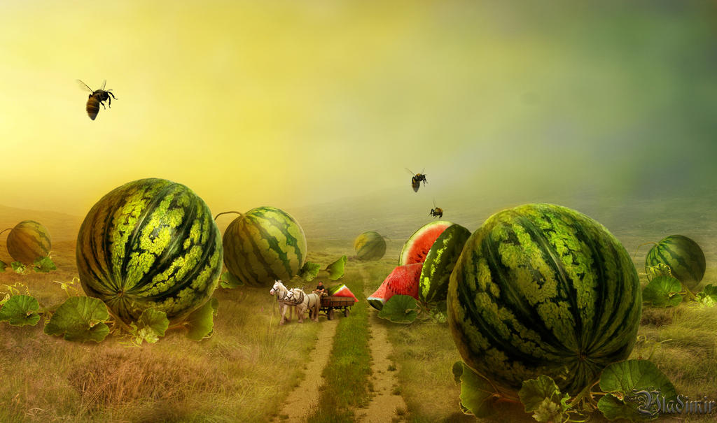 melon field by dex66v