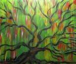 Weeping Love Tree