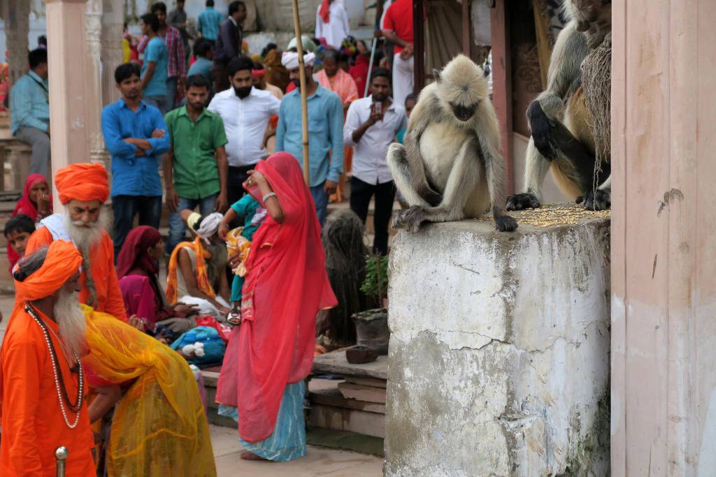 Monkeys in India by Dragon181