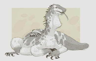 Lizard Sketch