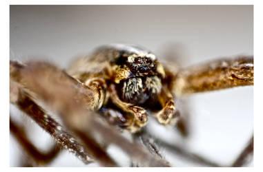 Spider Macro by EMCEJ