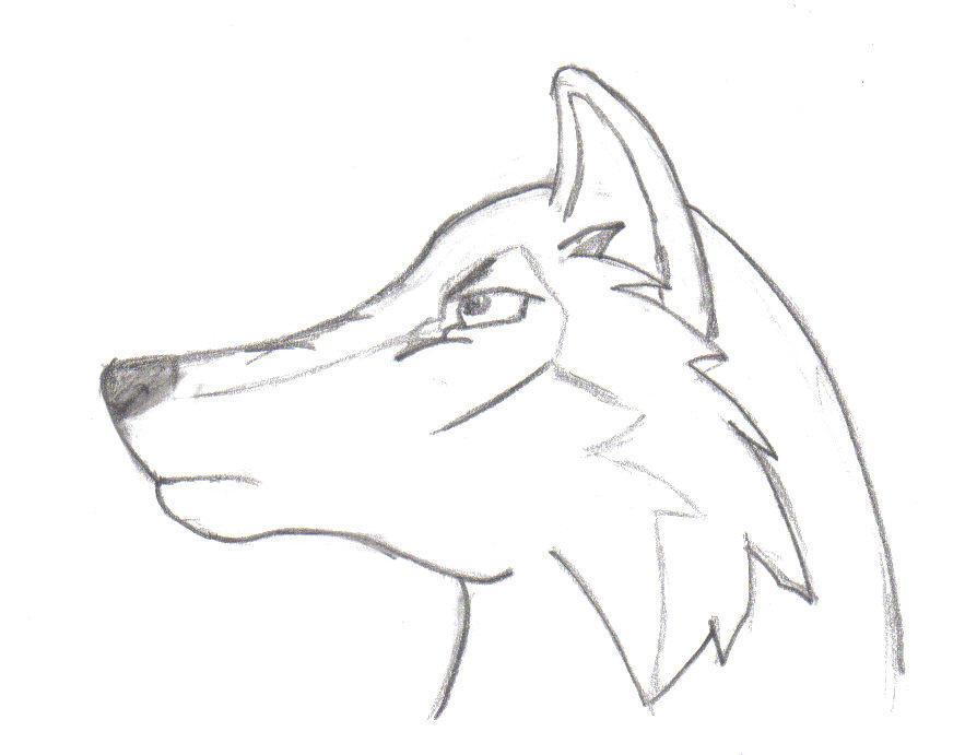 draw cartoon wolf