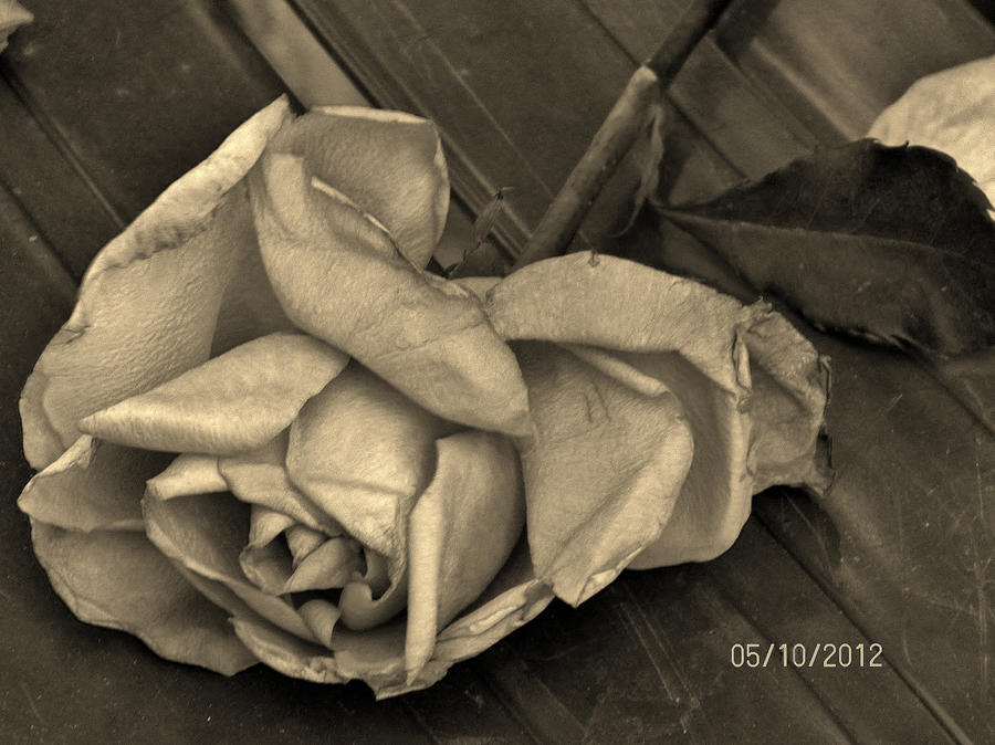 Wilted Flower Black And White Black And White Wilted Rose