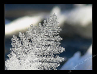Wintertime by albatros1