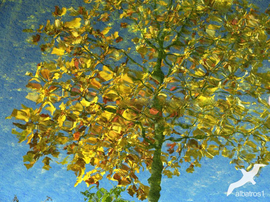 Autumn Reflection by albatros1