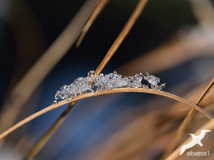 caterpillar of Ice by albatros1