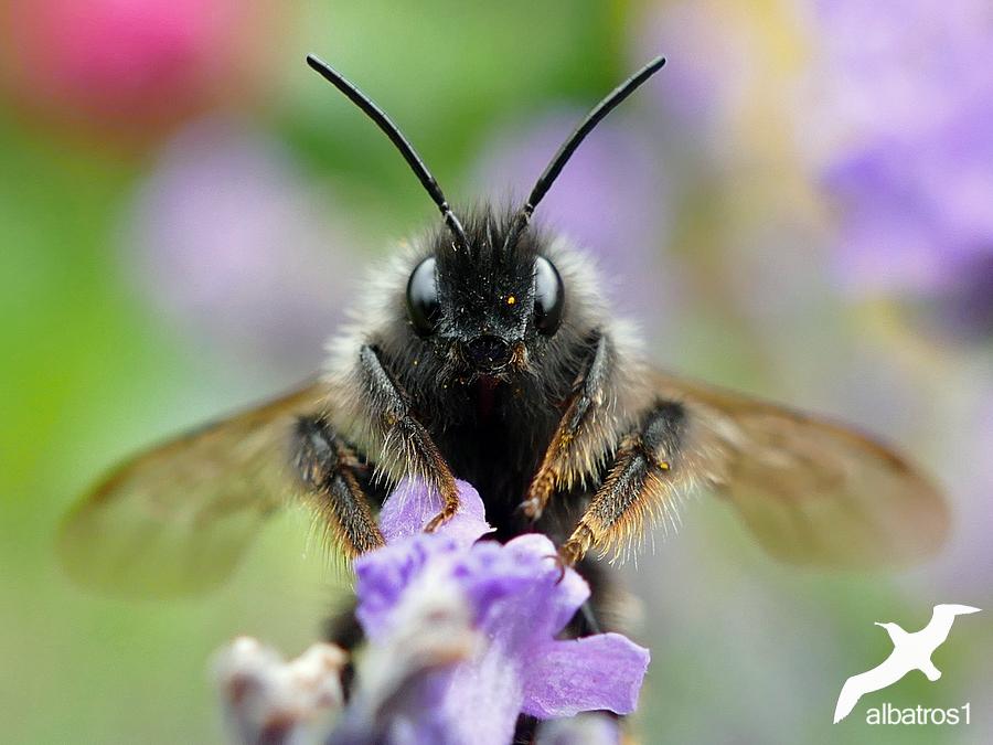 Bumblebee starts by albatros1