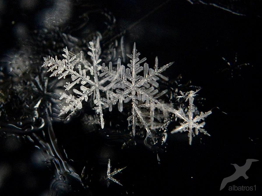 Snowflakes by albatros1