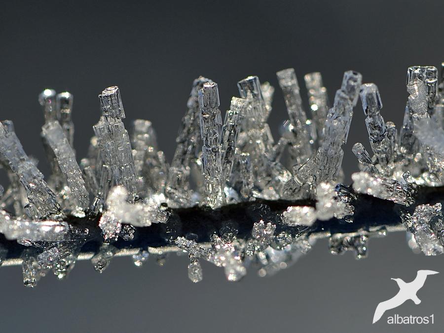 Hoar Frost by albatros1