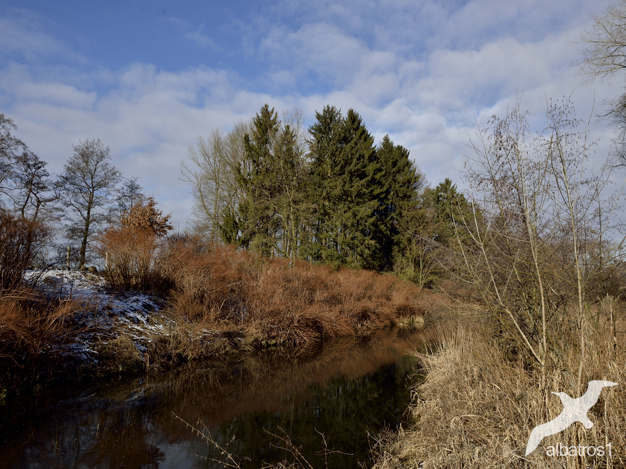 old River by albatros1