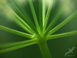 Goutweed In The Light  by albatros1