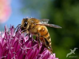 again a Bee by albatros1