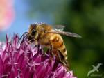again a Bee