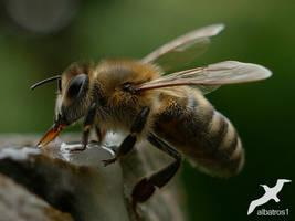 Big Bee by albatros1