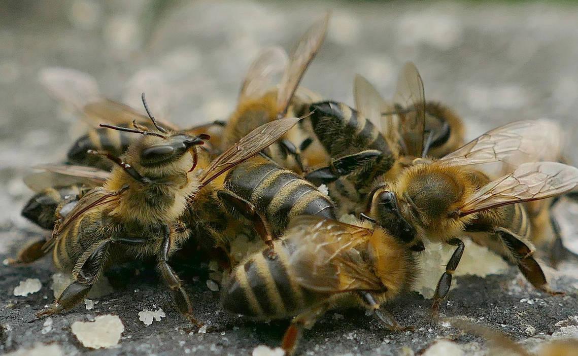 Bee Meeting by albatros1