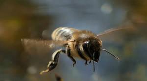 fly little Bee