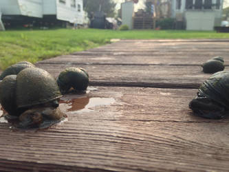Snails by SuperWomanista454