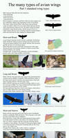 The many types of avian wings. part 1