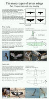 The many types of avian wings. part 2