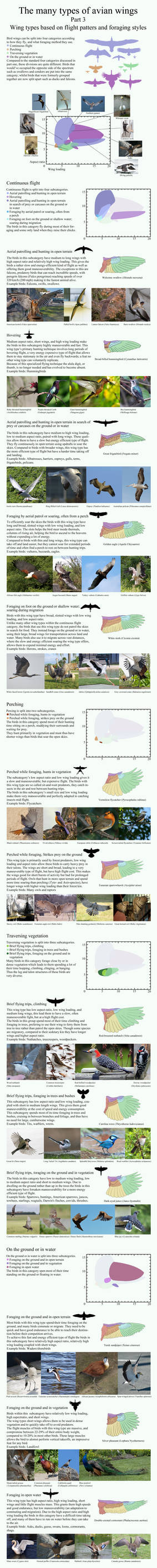 The many types of avian wings. part 3