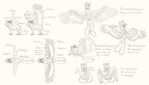 Wing study: Cryistall