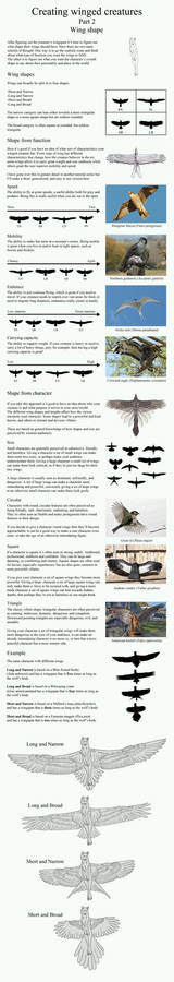 Creating winged creatures part 2: Wing shape