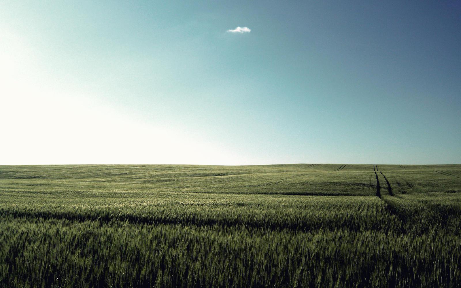 Wheat Field by PhK-Dan10