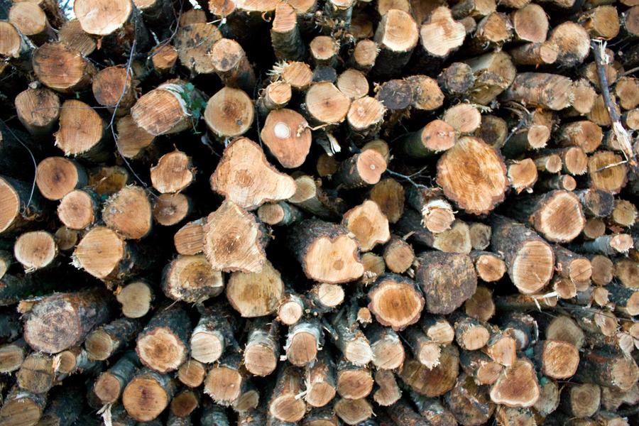 Log texture by drumcrazy779