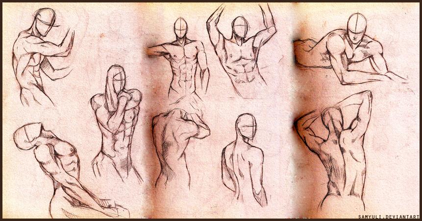 Male anatomy practice by SamanthaLi on DeviantArt