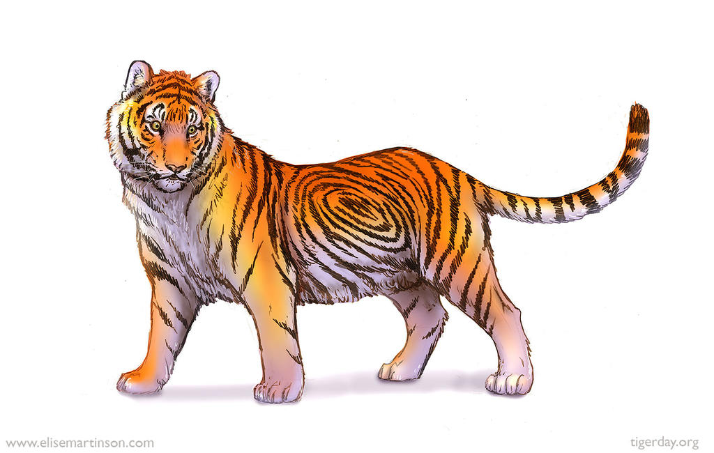 Global Tiger Day Sketch By T
