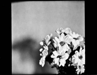 Marguerites by x-escapevelocity-x