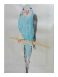 Parakeet Watercolor