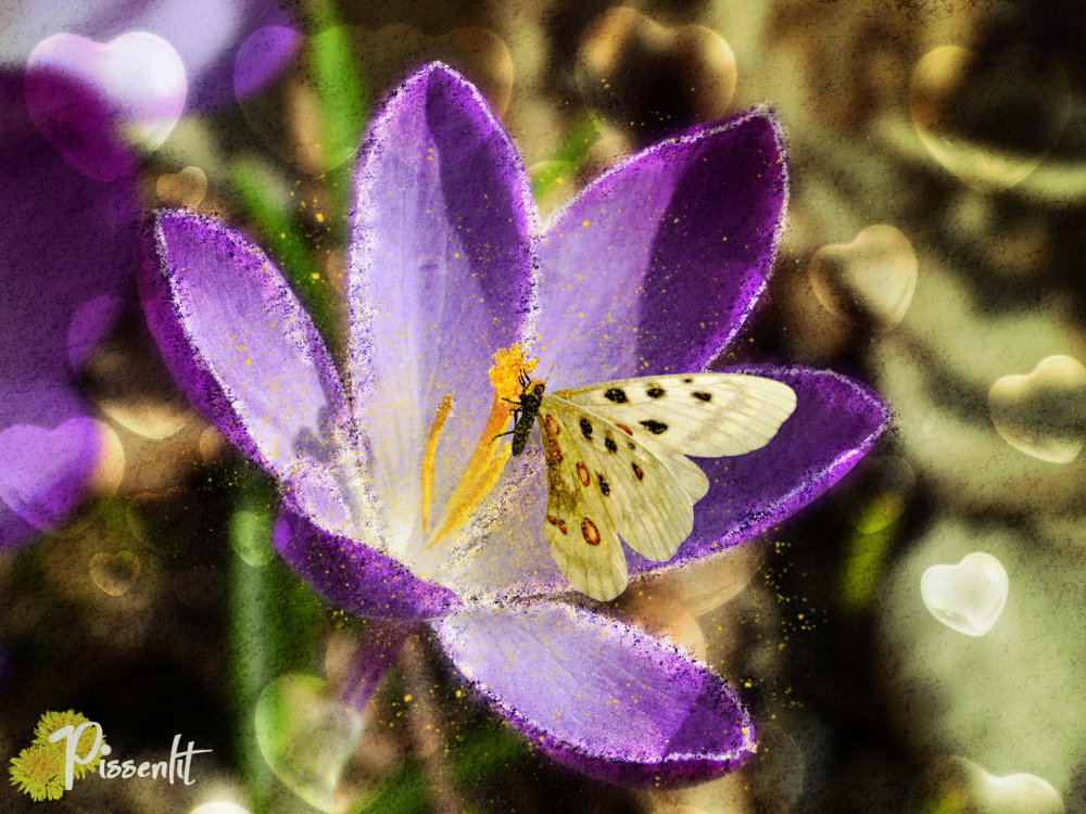 Butterfly and Crocus by Pissenlit00