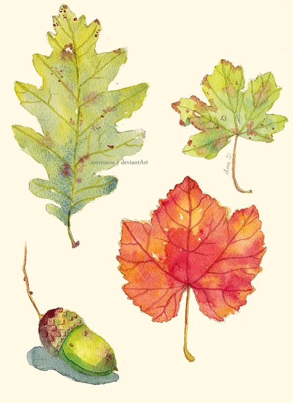 fall. by merrinou