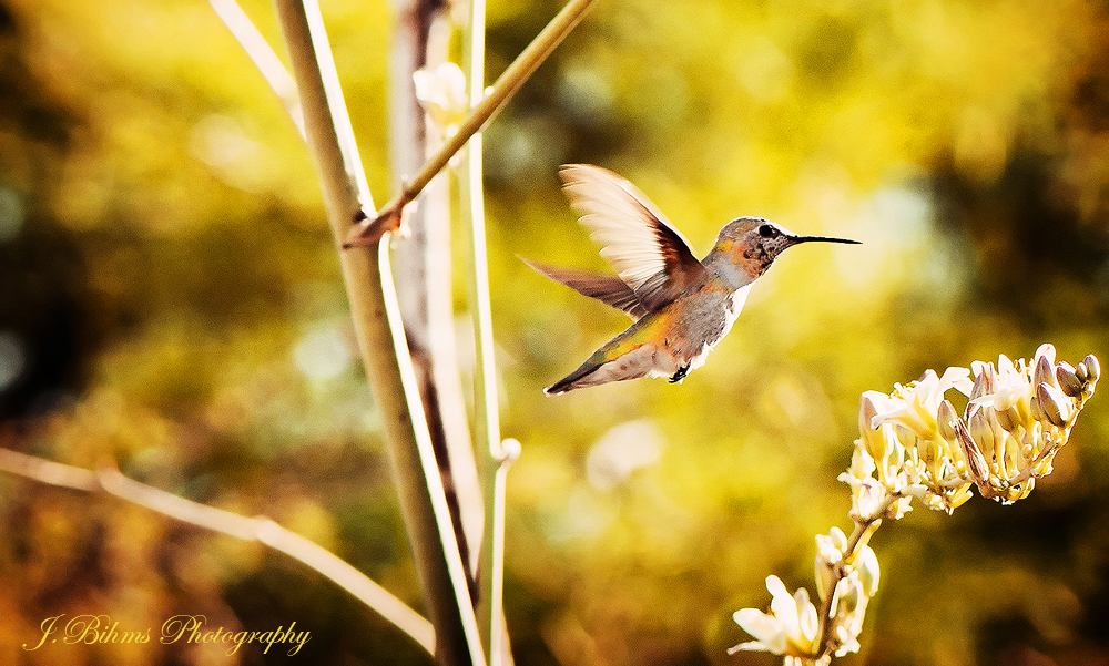 Hummer by yungstar