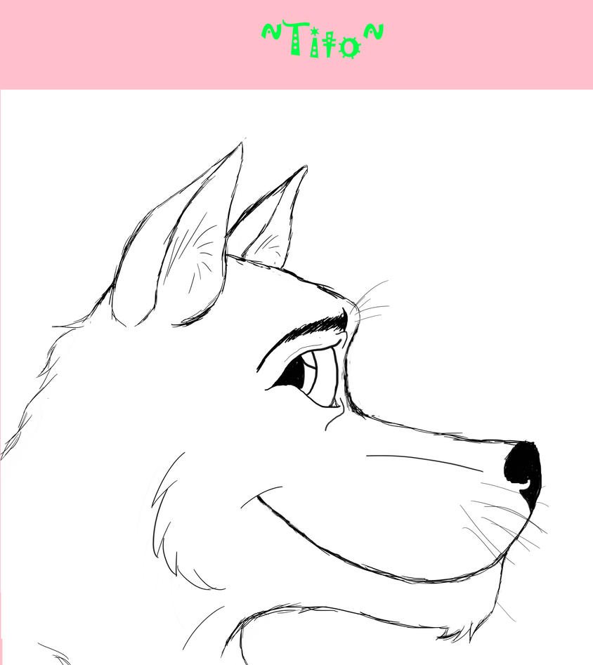 Wolf Sketch turned into Tito! by BaltoTheShadowHusky