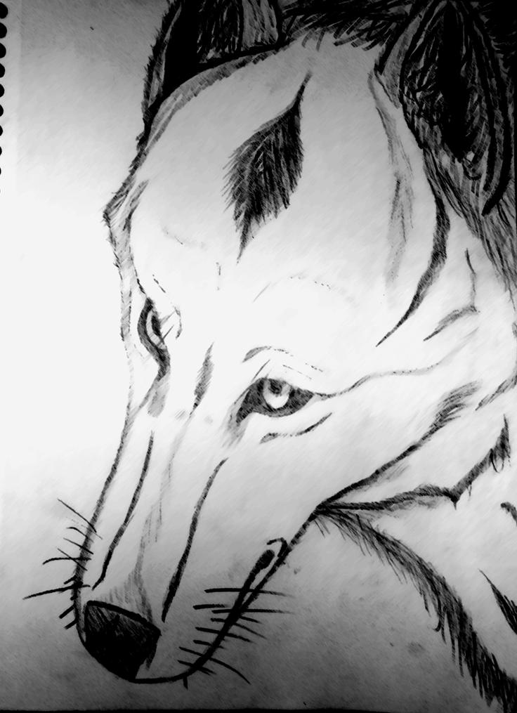 Wolf by BaltoTheShadowHusky