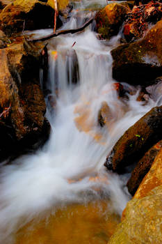 Amicalola Falls State Park 18